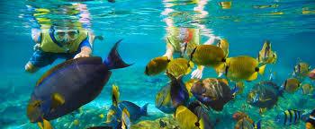 snorkeling images Rainbow reef snorkeling aulani hawaii resort spa jpg