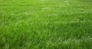 concimazione tappeto erboso concime prato concime