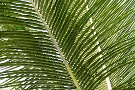 tropical nature palm tree leaves pattern pictures