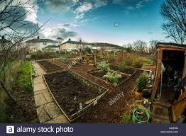 a neat well laid out local council owned allotment garden in