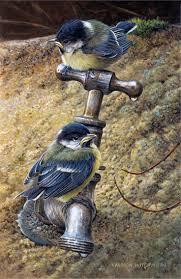 389 best birds images on pinterest beautiful birds pretty birds