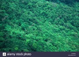 canopy amazon aerial view primary tropical rainforest canopy amazon brazil