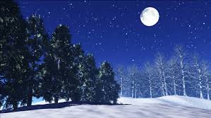twinkle in the sky snow fall in winter trees shake