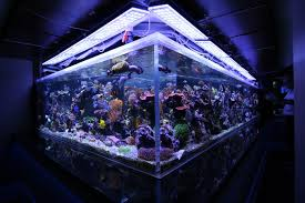 led reef aquarium lighting led aquarium lights advantages disadvantages