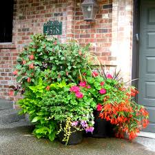 Indoor Container Gardening - container gardening services in seattle seasonal color pots llc