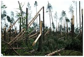 worst disaster in the history of poland fells record number