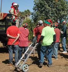 living on earth renting trees keeps the christmas spirit alive