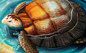 Tortoise Home Decor by Kitchen Bath Rx In House Painting Colour Choices And Feng Shui