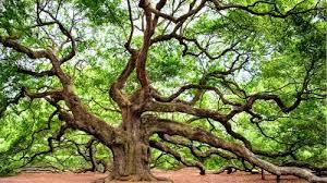 oak tree monday s free daily jigsaw puzzle free daily