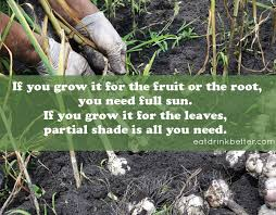 Fall Vegetable Garden Plants by How To Plant A Fall Vegetable Garden