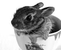 tea cup bunny black and white photography baby bunny home decor