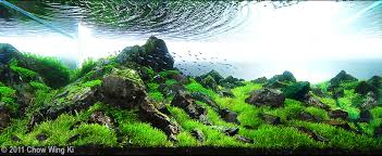Mountain Aquascape How To Win An Aquascaping Contest U2022 Aquascaping Love