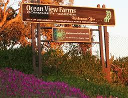 mar vista green garden showcase 3300 s centinela ocean view farms