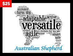 australian shepherd club of america frequently asked questions masca miniature australian shepherd