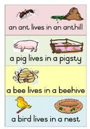 english worksheet farm animals and their home matching worksheet