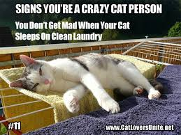 Crazy Cat Memes - crazy cat person 11 catloversunite net