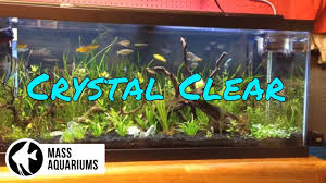 how to keep your house clean all the time how to keep crystal clear water in your aquarium clean fish tank