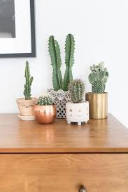 selection of splendid 29 cacti in diy flower pots homesthetics