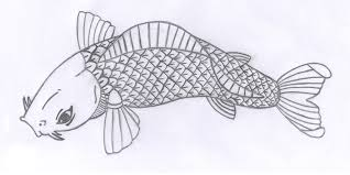 koi fish drawings in pencil gallery clip art library