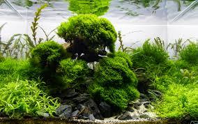 mot u0027s aquascapes added aga 2015 aquascapes uk aquatic plant