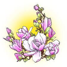 magnolia flowers magnolia flowers digi st in digital images