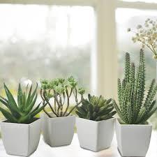 mini plants fake mini cactus plants