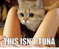 Tuna Sub Meme - this isn t tuna weknowmemes