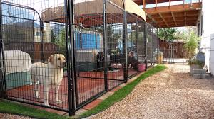 if you own and operate a dog kennel keeping your animals happy and