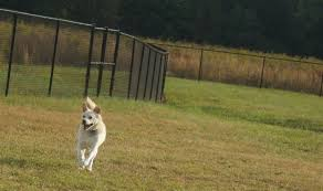 ohmidog ohmidog celebrating the glory of dog daily since 2008