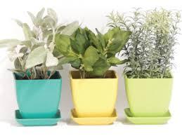 Herb Window Box Indoor 10 Important Tips To Create Your Own Indoor Herb Garden