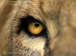 116 animals eyes images animals