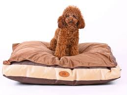 Overstock Com Pets Pls Pets Pls Pets