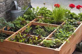 flower bed xeriscape garden plan modern garden