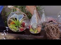 air plant terrariums u0026 tillandsia care 2 5 youtube
