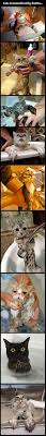 252 best cats images on pinterest funny stuff funny animals and