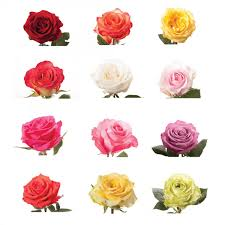 flower of the month 12 roses a month flower muse