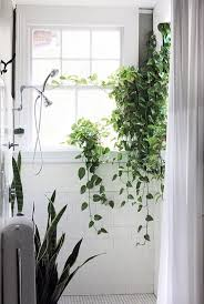 Plants In House 560 Best Welcome To The Jungle Images On Pinterest Jungles