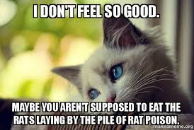I Feel Good Meme - i don t feel so good maybe you aren t supposed to eat the rats
