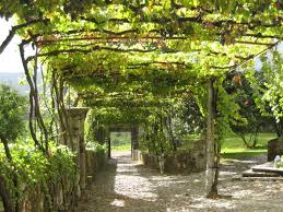 grape arbor designs peeinn com