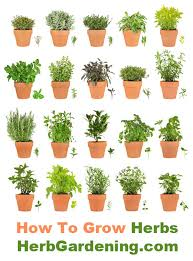 Kitchen Herb Garden Design 10 Wonderful And Cheap Diy Idea For Your Garden 7 Growing Herbs