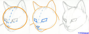 how to draw a cat head draw a realistic cat step by step pets