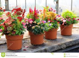 pretty potted plants on old wood table stock photo image 56017089