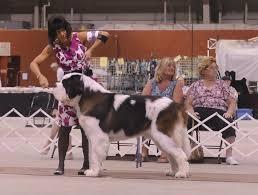 affenpinscher joey dog show 2012 09 30