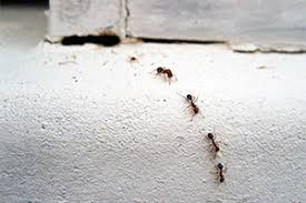 sick of the ants here u0027s how to get rid of tiny ants in the kitchen
