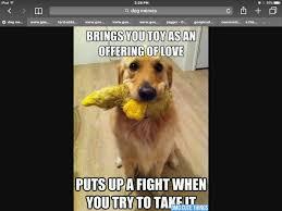 Best Dog Memes - 41 best dog memes images on pinterest dog memes funny animal