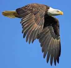 birding in nebraska audubon nebraska