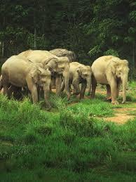 elephants wcs org