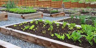 How To Make Self Watering Planters by How To Make A Self Watering Vegie Bed Lifestyle Home