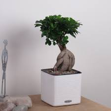 Self Watering Indoor Planters by Tropic Snow Indoor Plant Home Or Office Complete As Shown In Cube
