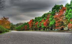 wallpaper 3840x2400 trees autumn green